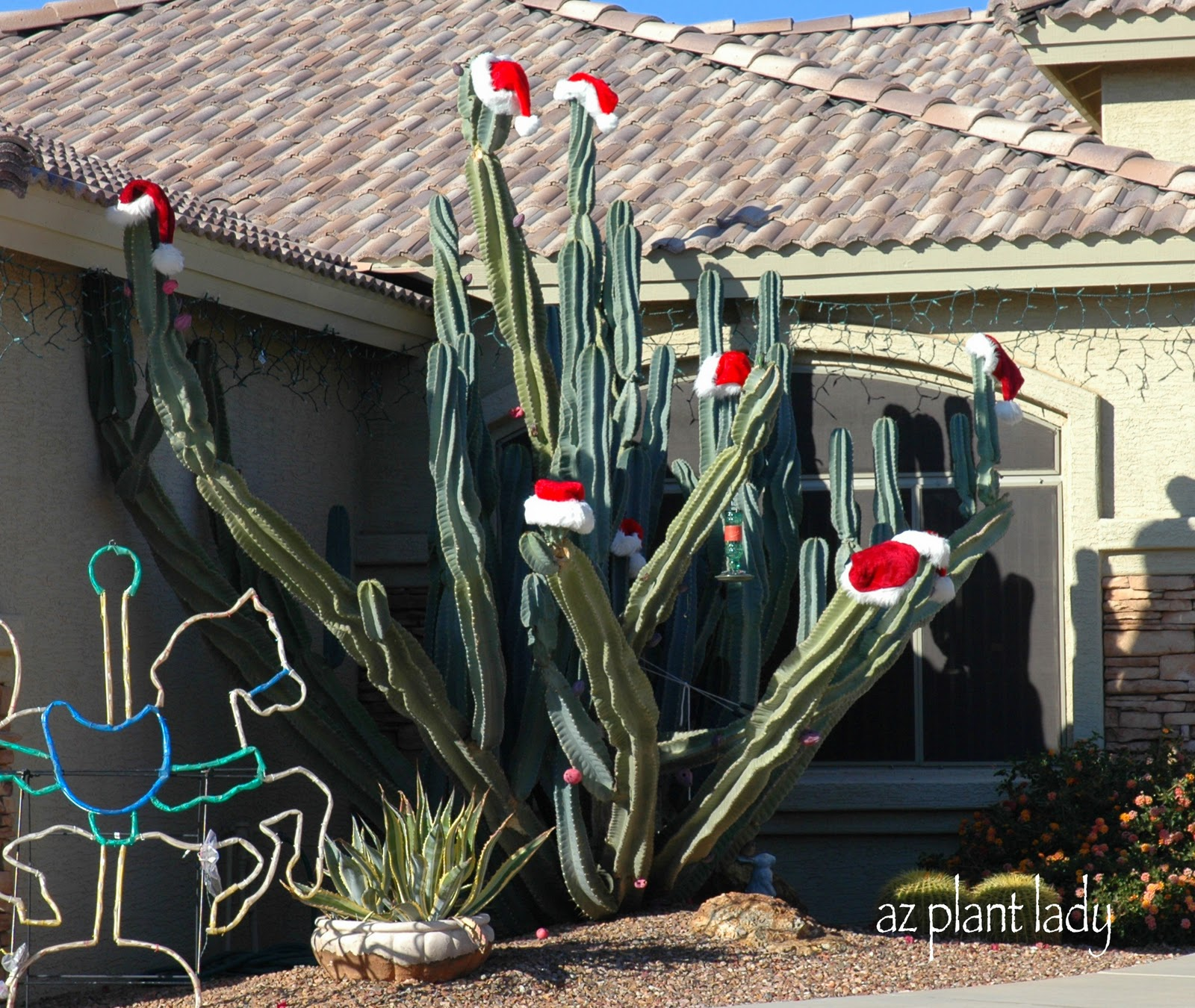 Cactus Decorated For Christmas: Ramblings From A Desert Garden