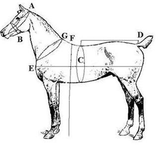 English , Western. Horse. Pony .Mini Saddles and Tack for