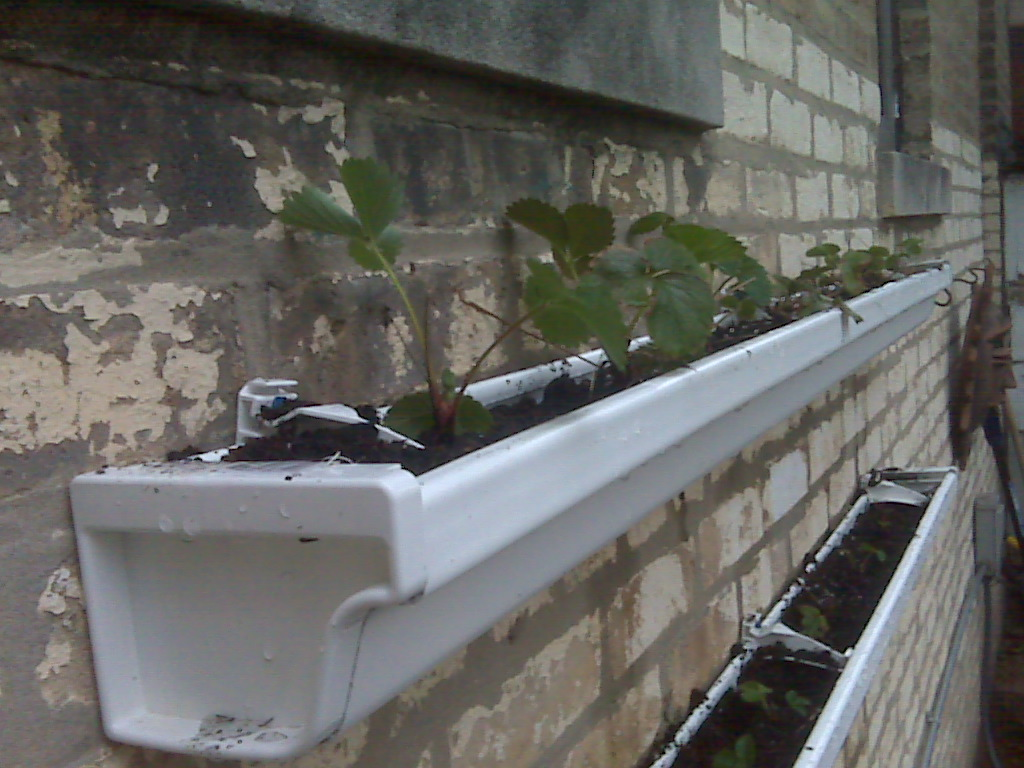 Horto In Urbs Rain Gutter Strawberry Beds