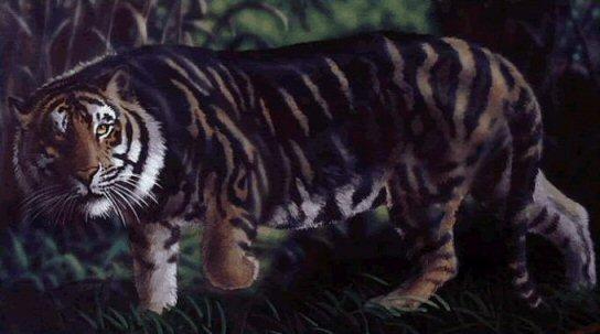 black tiger animal - photo #15
