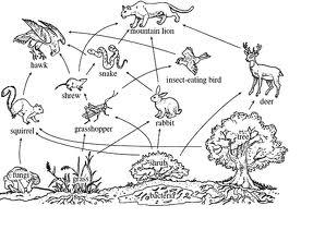 Gallery For > Simple Food Web Definition