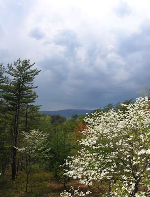 dogwood and mountain view