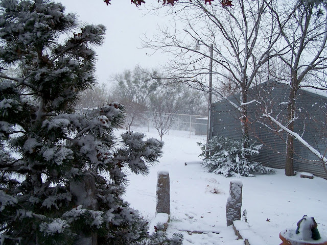 Pretty Snow image at Texasdaisey home