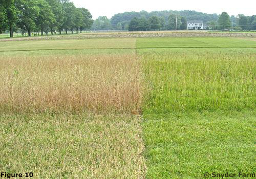 Rutgers Snyder Research Farm Demonstration Site Comparing Diffe Mowing Practices On Tall Fescue The Right To Perennial Ryegr Left During A