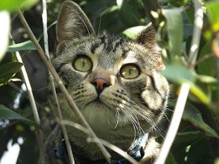ASTROVET: Il gatto e i suoi ritmi nella coabitazione con l'uomo