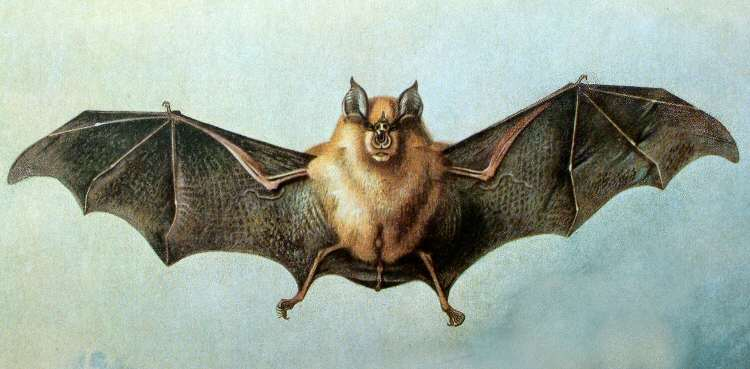 Note Of Diary: Cave Bat For Health