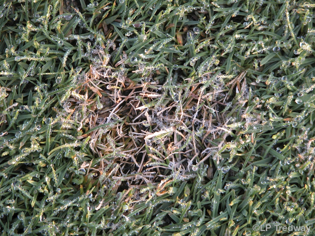 Turfgrass disease updates for golf courses: Is Emerald a