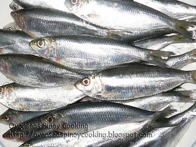 Tawilis Sardines