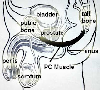 Pc muscle flexes accelerating orgasm