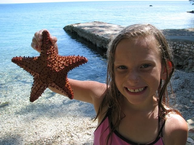 Reeves Life What Do Starfish Eat