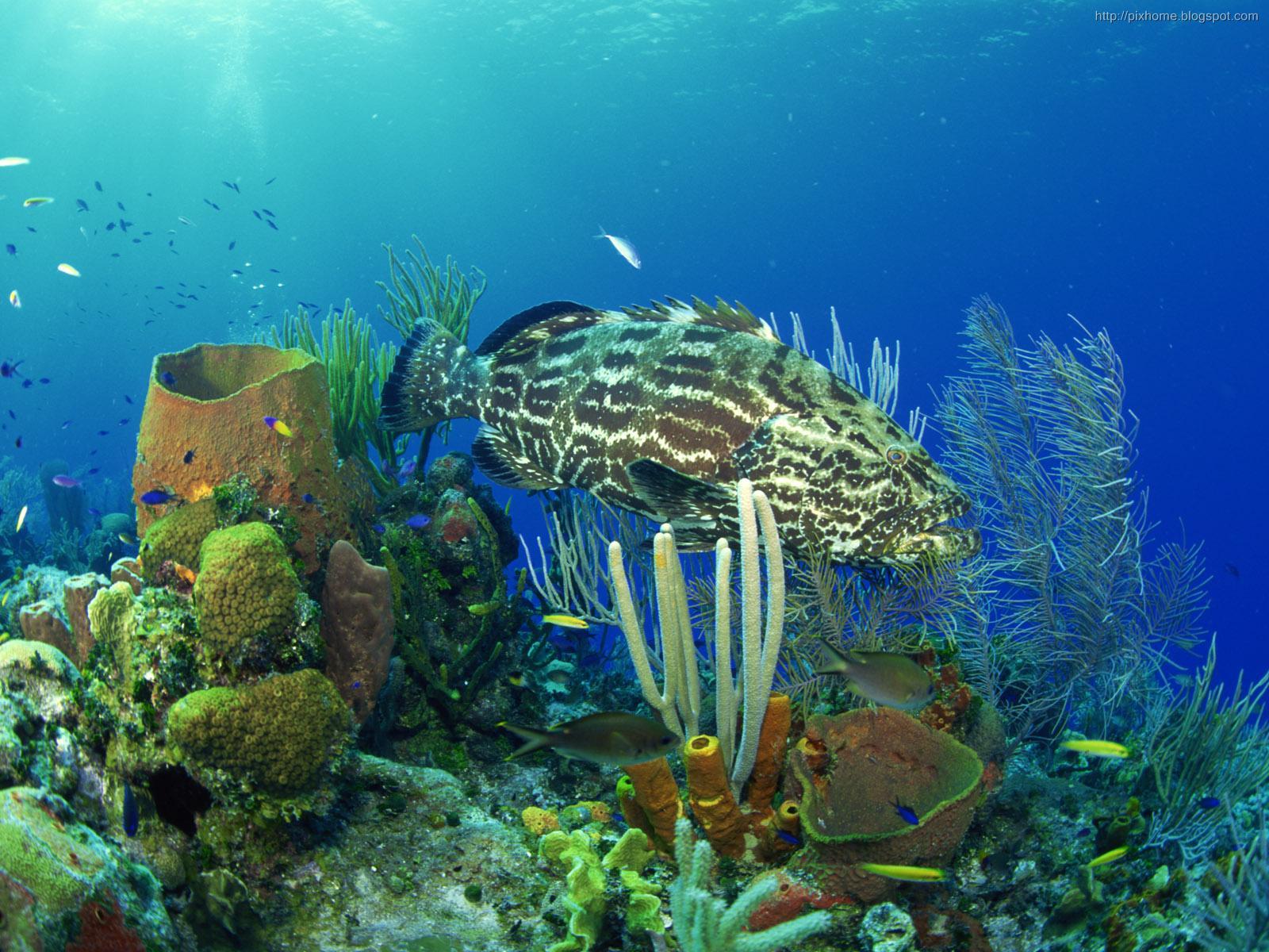 underwater sea animal creatures, plants, pictures HQ 1600x1200