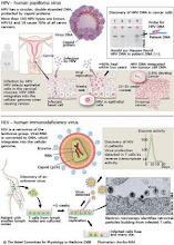 Human Immundo Deficiency Virus and Papiloma Virus