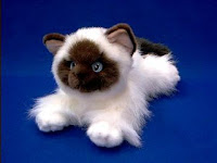himalayan cat plush stuffed animal