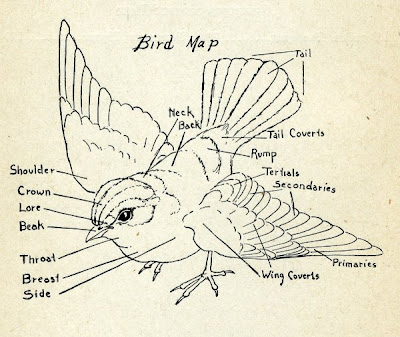 Emma Bell Miles Bird Map