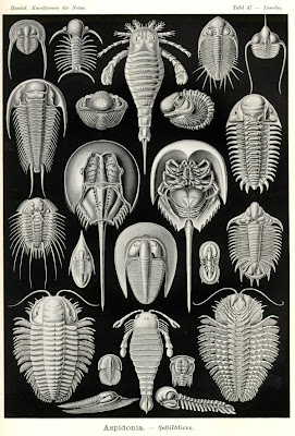 Trilobites, eurypterids, and horesehoe crabs from Haeckel's Artforms In Nature