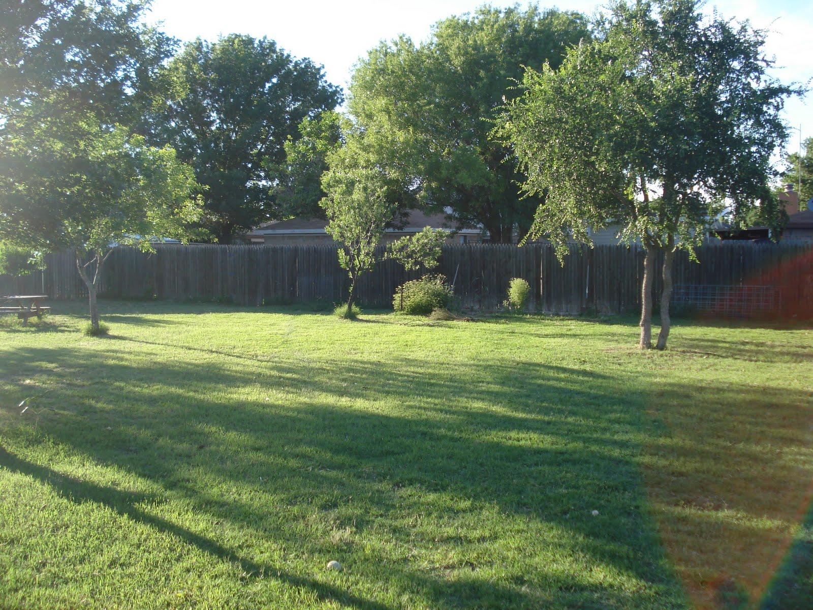 My Lubbock Garden: Shade Trees: Shumard Red Oak