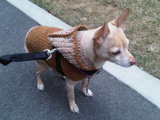 Chihuahua in his new sweater, NYC