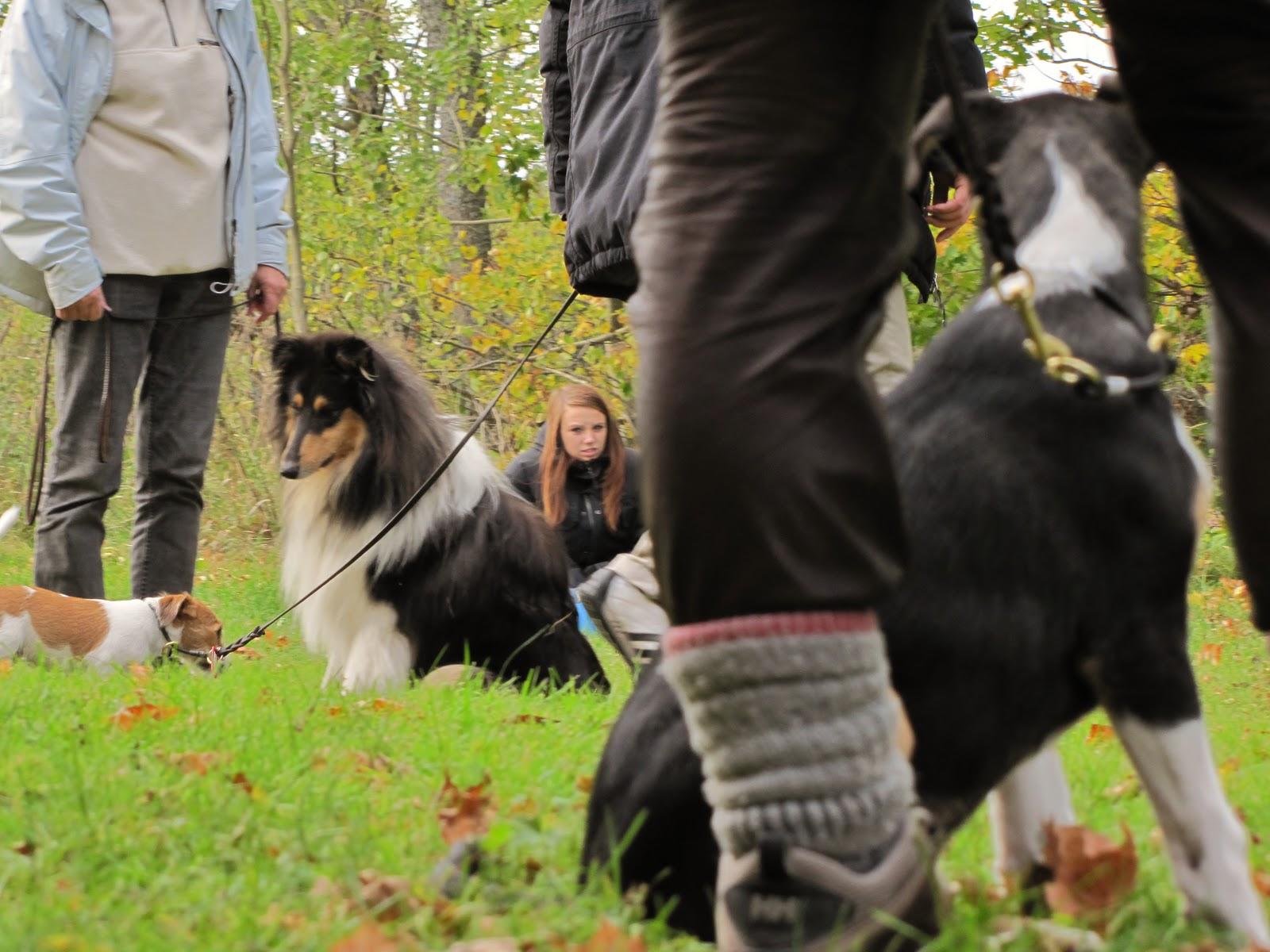 Misshandlade hundens hjartskarande mote