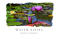 Water Lily Panorama by John Corney