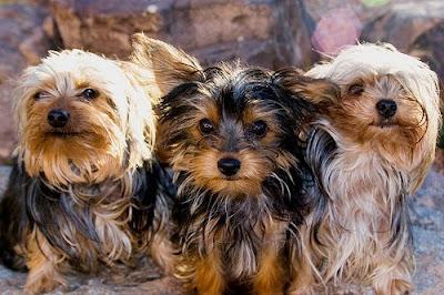 Image Result For Dog Psychology Training