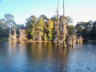 Belle Isle, South Carolina, Water, Cypress Trees
