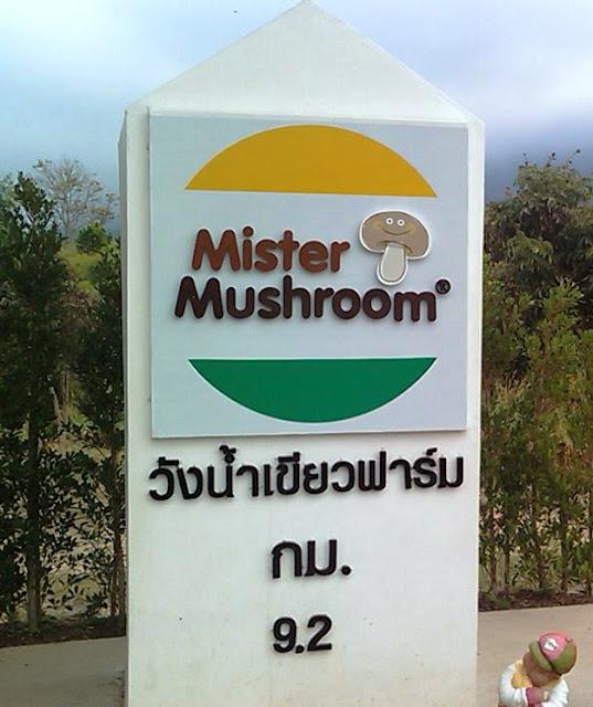 Mr. Mushroom in Wang Nam Keaw - Thailand