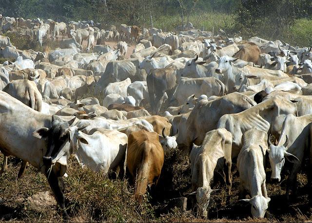Ambientalistas falam contra a pecuária, mas parecem não entender nada sobre ela