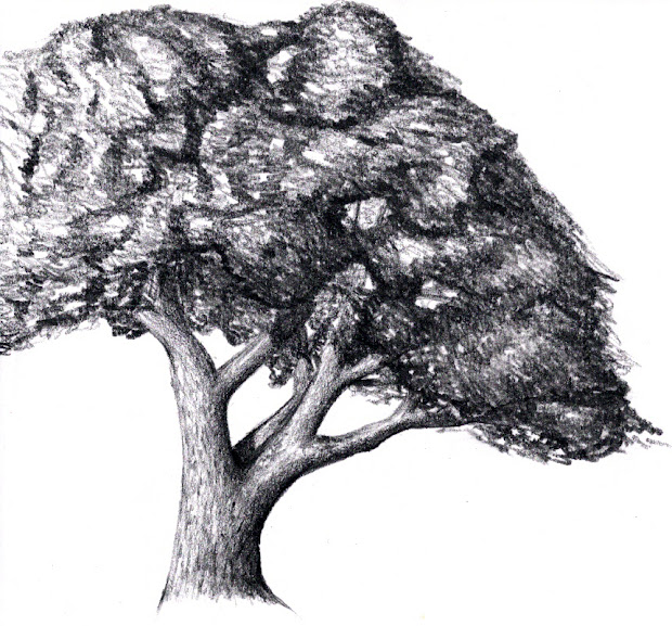 Draw Tree - Central