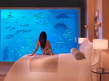 Graphical Atlantis Palm Jumeirah Dubai Uae