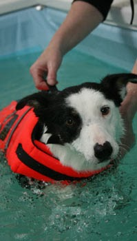 Rebound Hounds The Healing Power Of Hydrotherapy