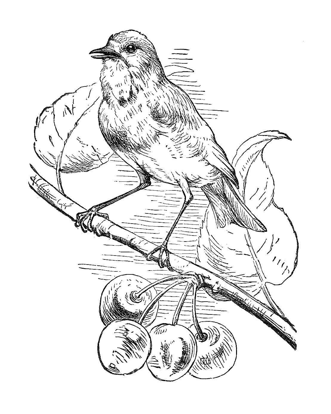 Antique Images Free Black And White Illustration Bird