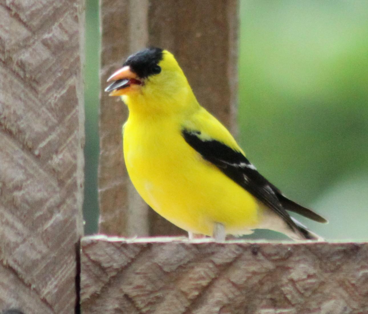 Birds: The Retirement Chronicles: Summer Birds