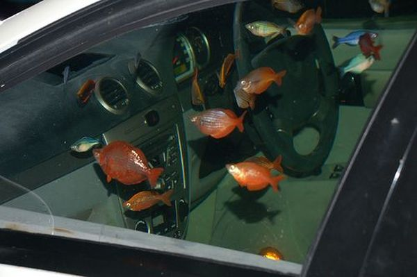 Car turned into a fish tank aquarium: 12 Pics+Video