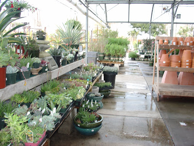 I Go To Yamagami Nursery Whenever Need New Plants And Flowers This Is Located At 1361 S De Anza Beaulavard Cupertino
