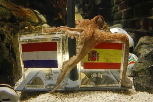 Ramalan SI GURITA PAUL Spanyol Juara piala dunia 2010   Si ...