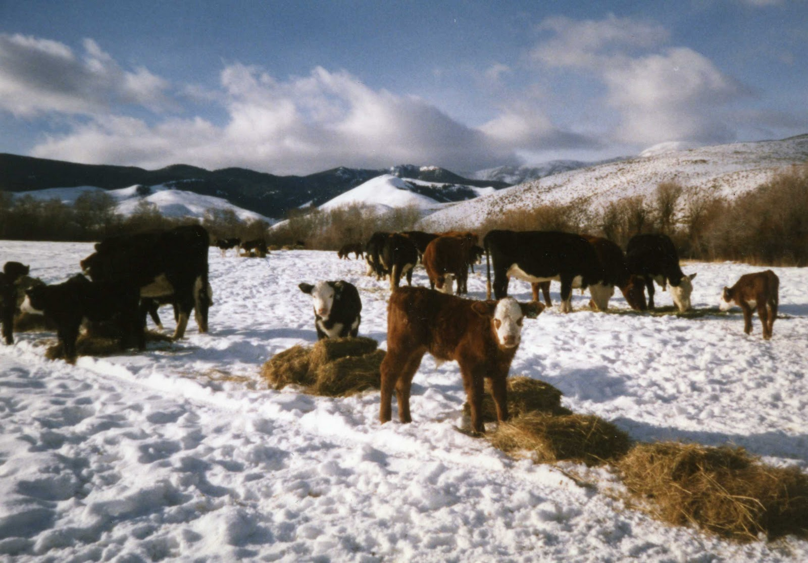 8 Tips to See the Best of the Great Migration Calving Season
