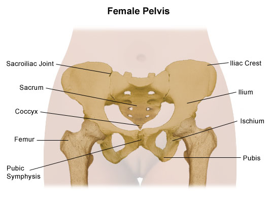 s.i joints and pelvic pain ~ pilates function with janine pelvis diagram female