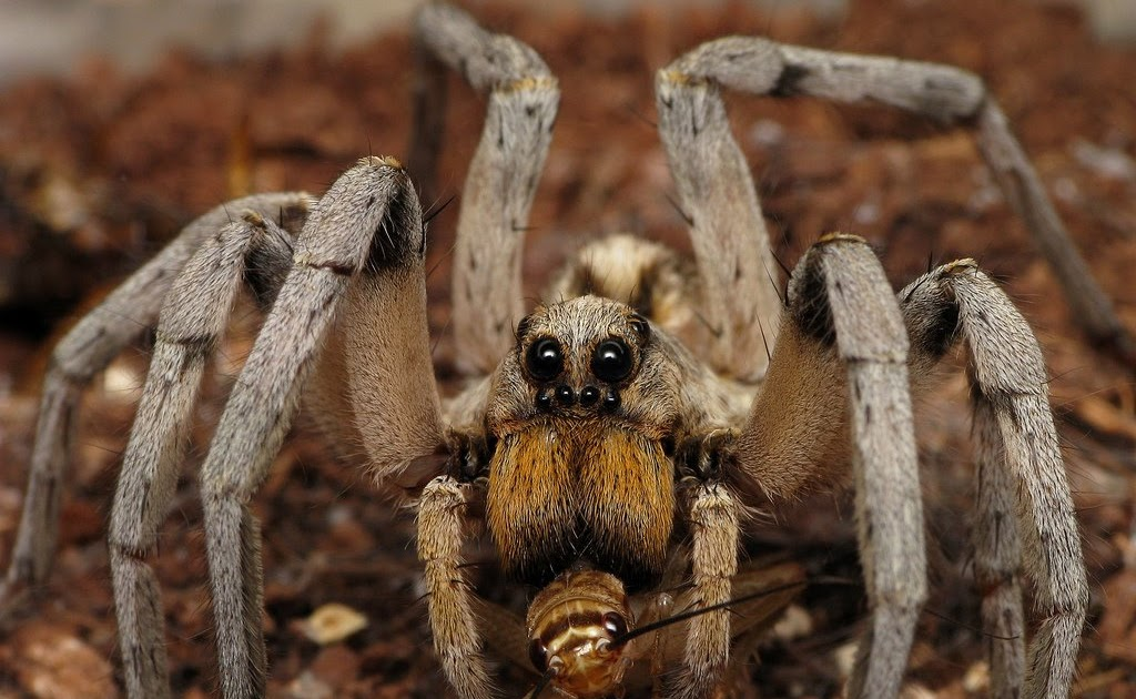 Animal Planet Wallpaper Hd Ugly Overload Wolf Spider Spotting