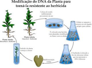 DNA RECOMBINANTE DO TECNOLOGIA PDF