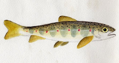 Tispaquin's Revenge: Revenge of the Nerds: The Story of ...Atlantic Salmon Parr