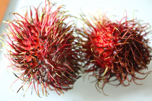 Hairy Red Fruit 82