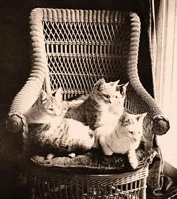 Mark Twains Cats