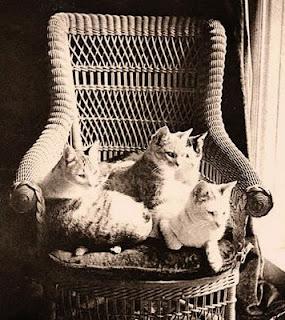 Mark Twain's cats
