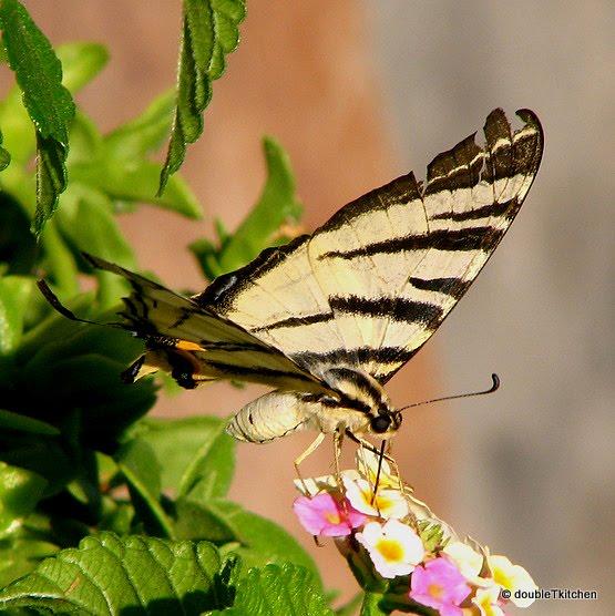 igra leptira