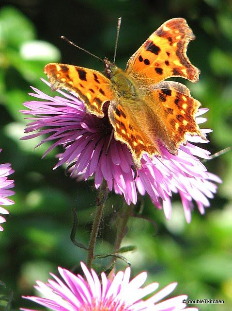 i leptira
