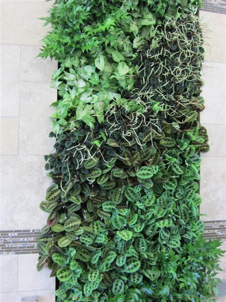 Lively Elements Living Wall Installations Lafayette