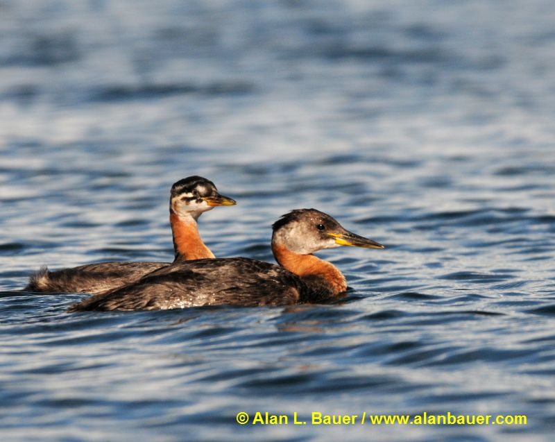 Alan Bauer Photography & Nature Blog: A vacation tour with