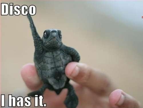 Turtle funny - photo#32