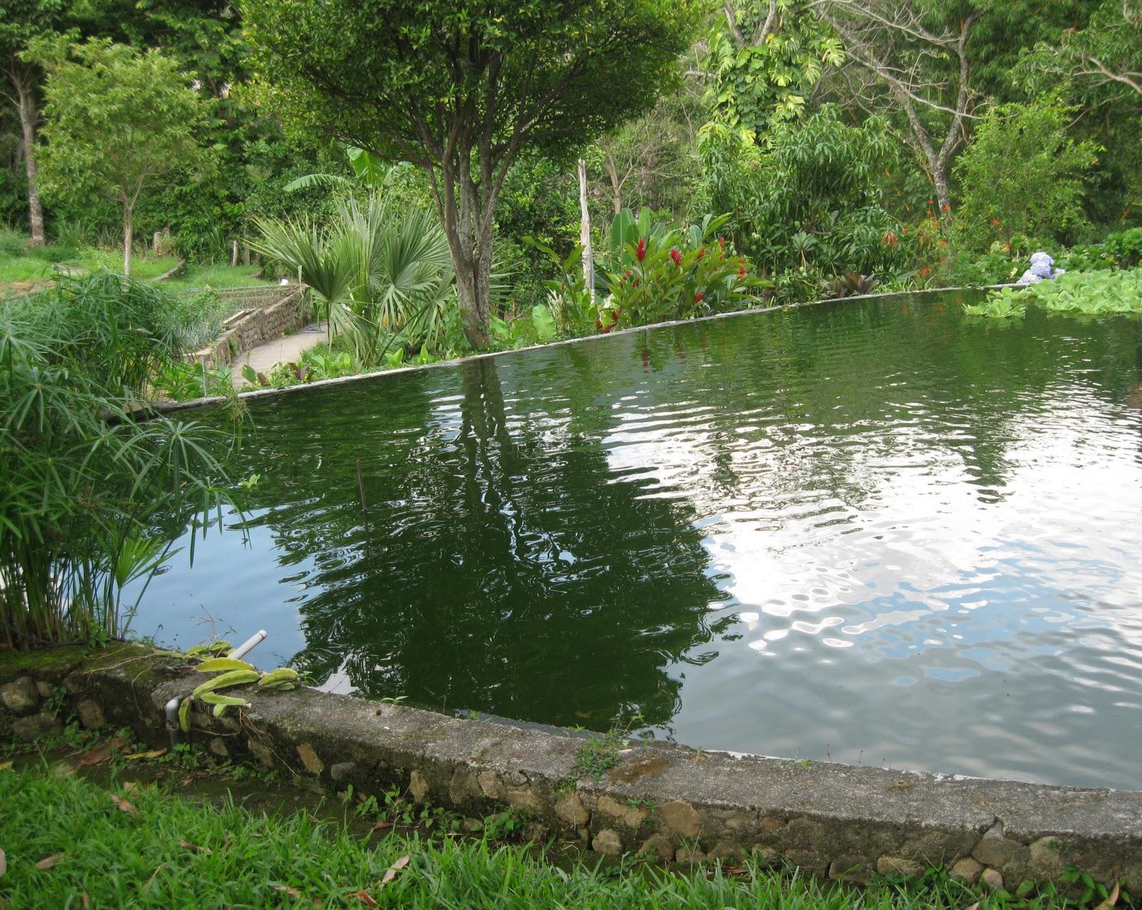 Restaurante las tilapias y posada don emilio san ignacio for Construccion de estanques para tilapia
