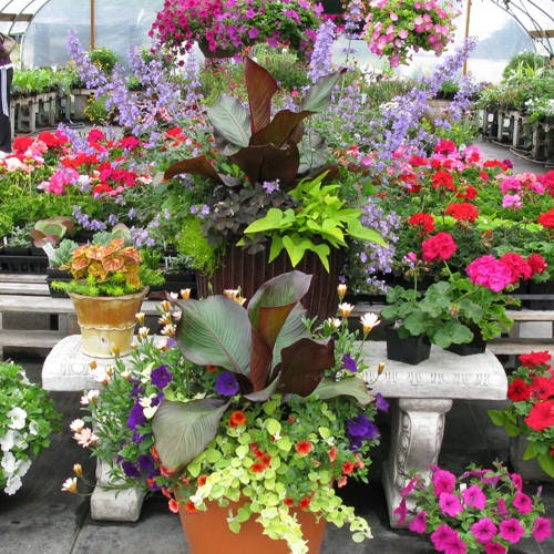 Mother S Day Container Garden Ideas: Nwgardens: Spring Container Gardening